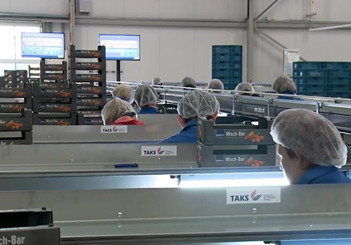 R-Packingline for mini vegetables and soft fruit