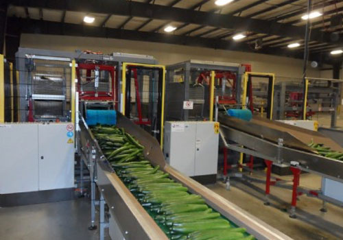 Double cucumber container system - Taks Handling Systems